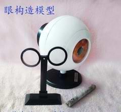 3954 眼构造模型 眼球 成像 小学科学 生物实验器材 教学仪器